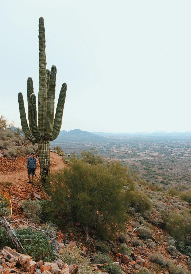 Anthem Arizona Sonoran Reserve Hiking North Phoenix Phoenix Hiking Cactus