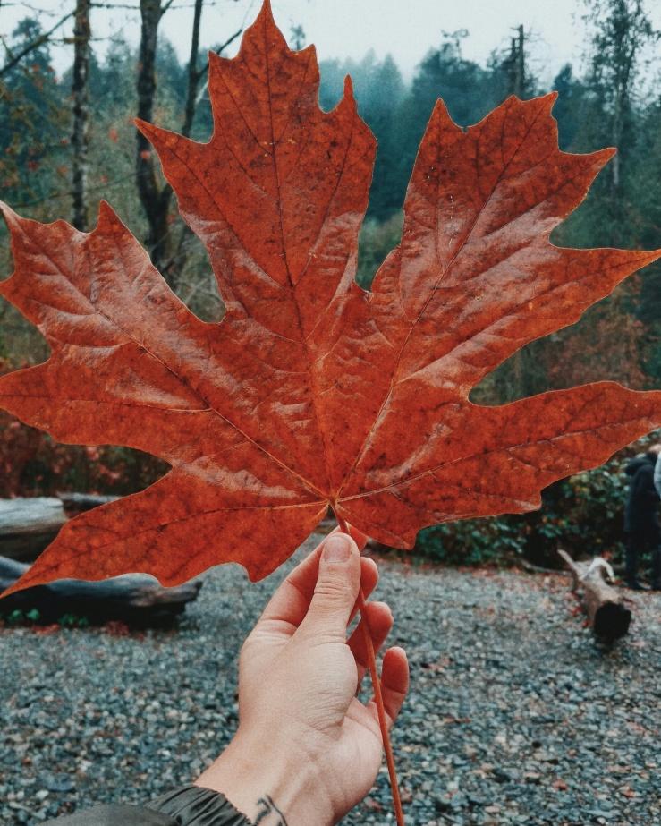 Victoria, BC Canada Maple Leaf